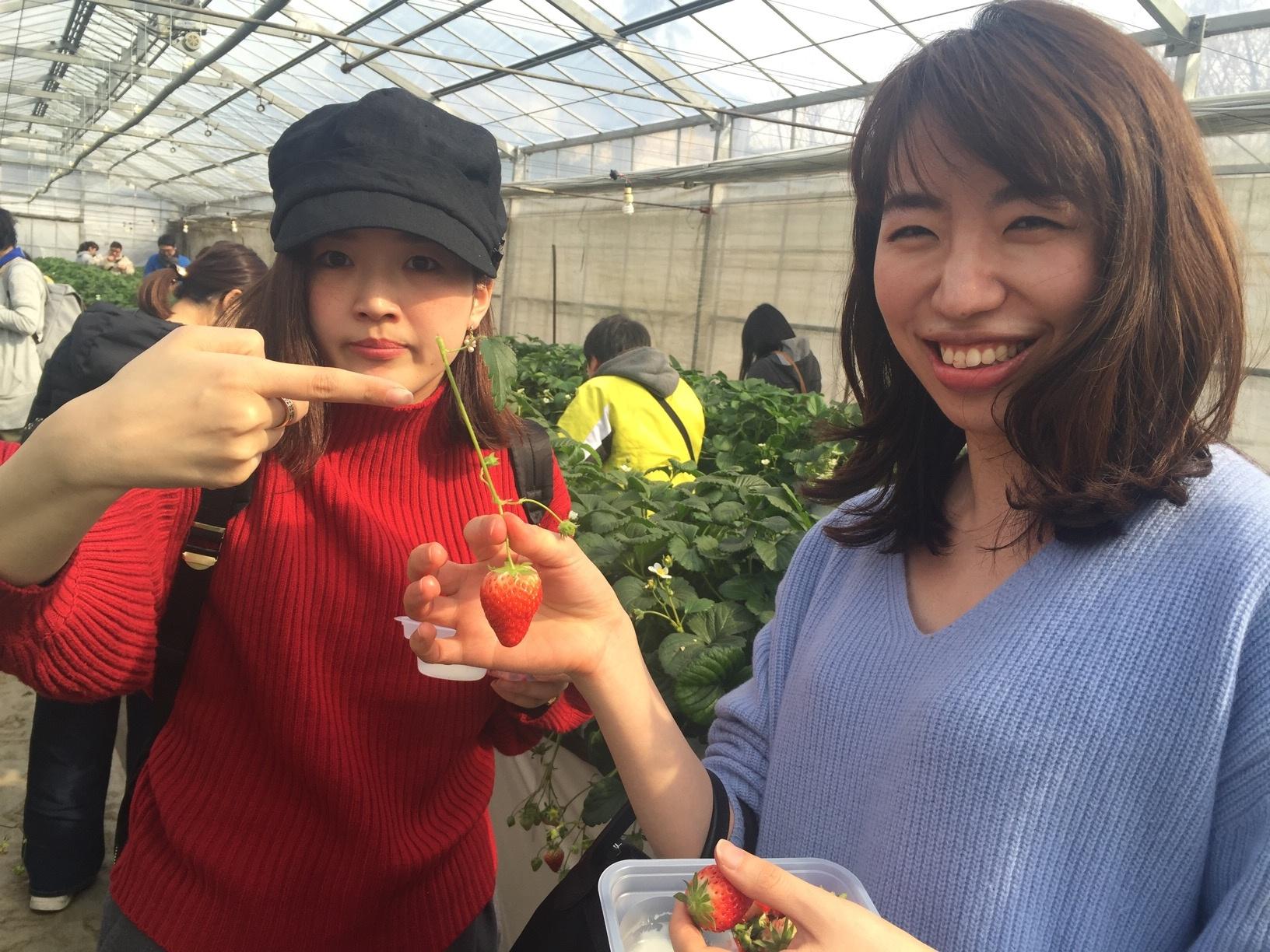 【電車&徒歩で行ける!いちご狩り】横浜駅から電車で26分&徒歩8分✨4品種のいちごが楽しめる農園をご紹介!≪samenyan≫_6