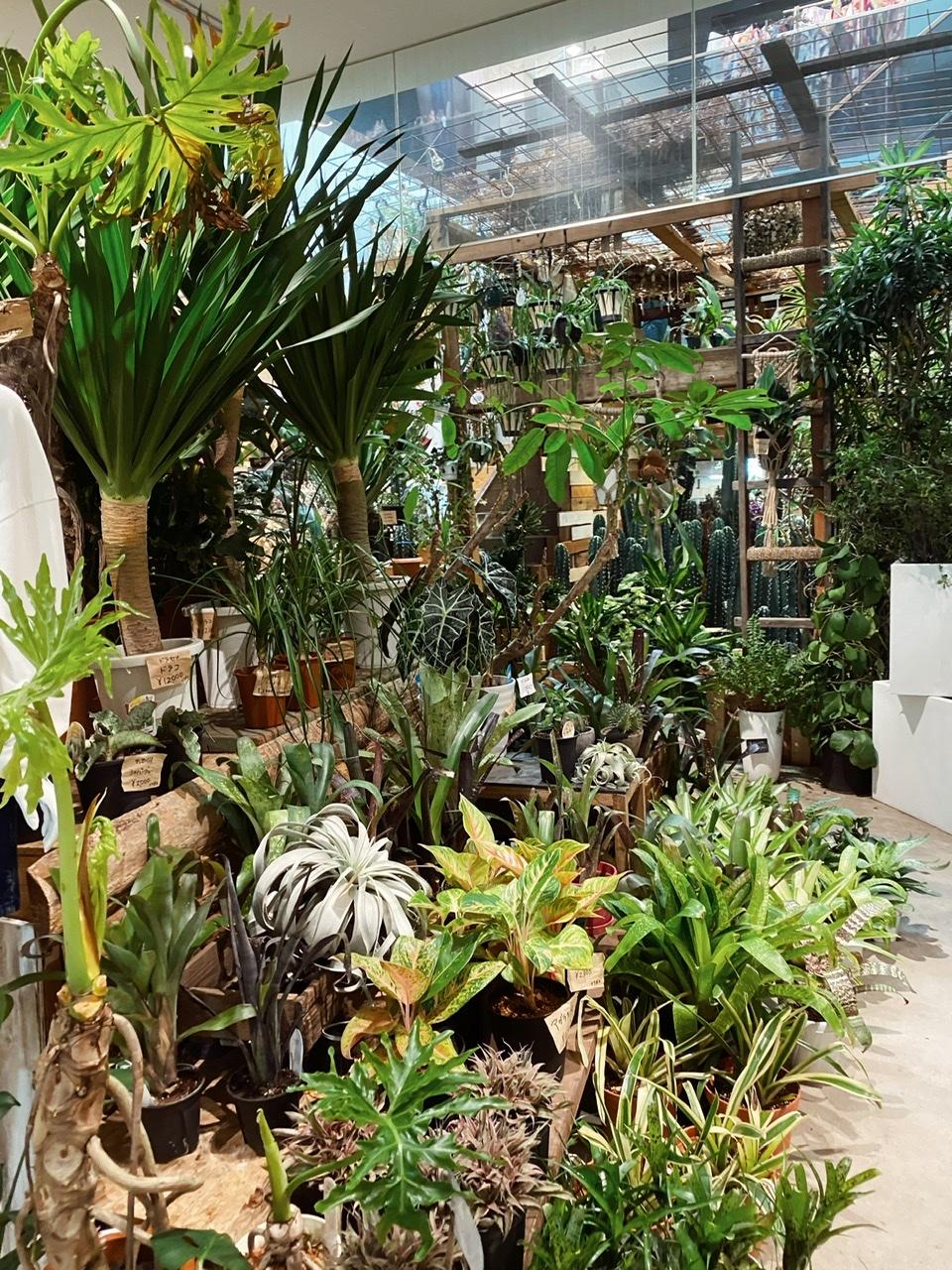 【お部屋に観葉植物を】横浜マリン&ウォークでショッピング_4