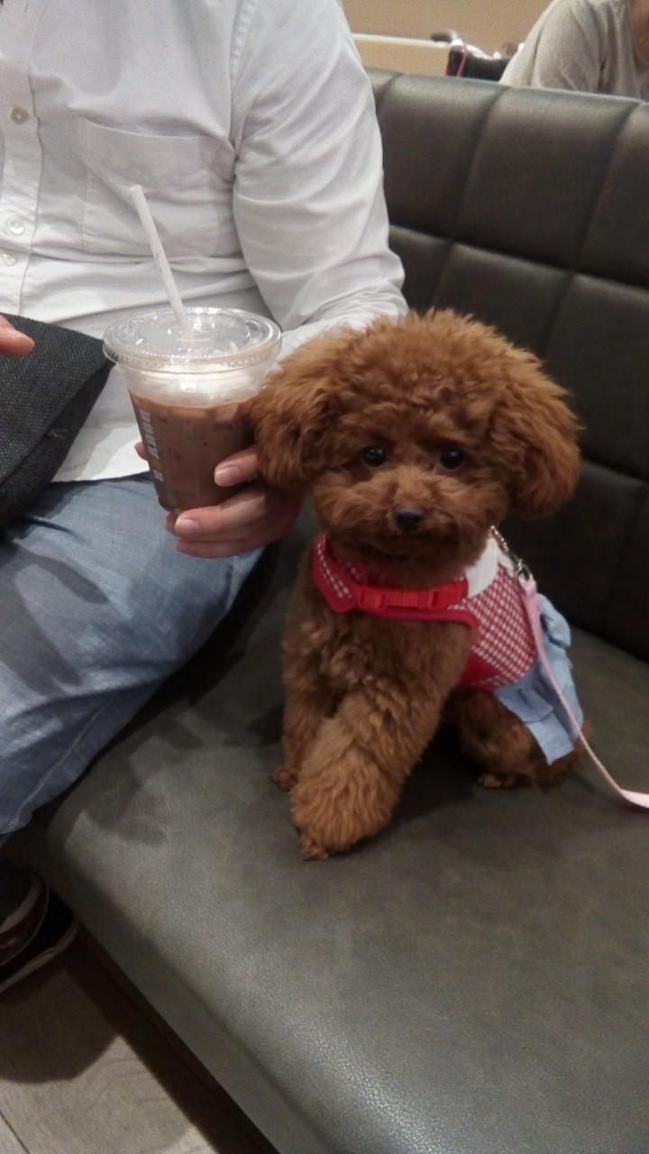 【今日のわんこ】テテちゃん、カフェにきて緊張!?_1