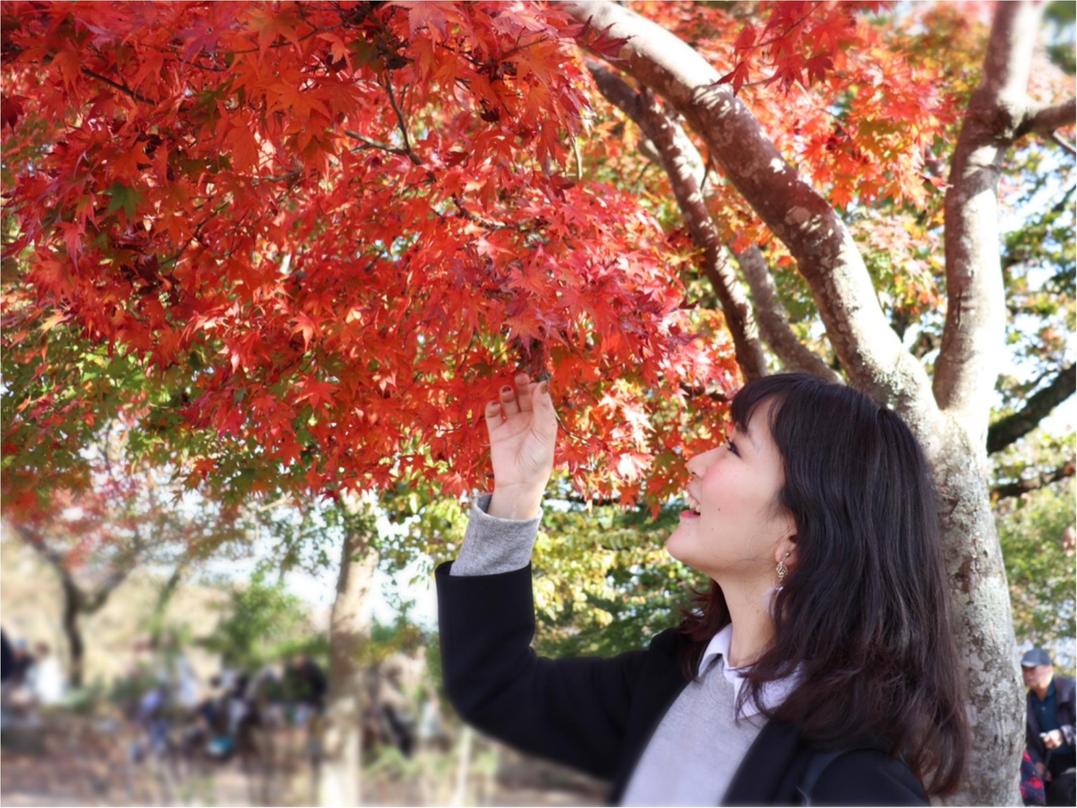 ▷2018年振り返り【秋のお出かけ】高尾山の紅葉狩りに行ってきました!!_1