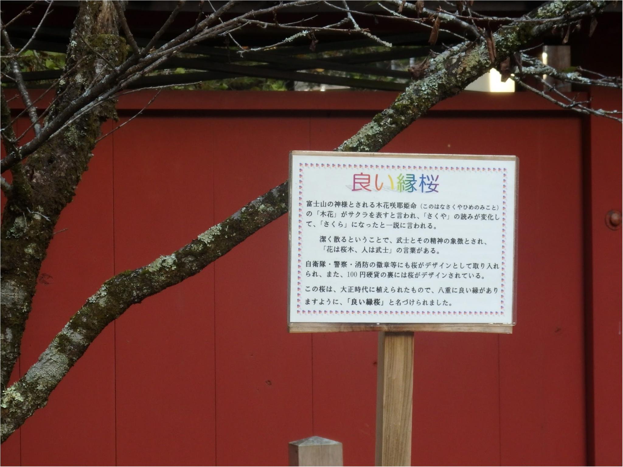 【知らなかった!】日本一楽しめる神社へ潜入してみた_15
