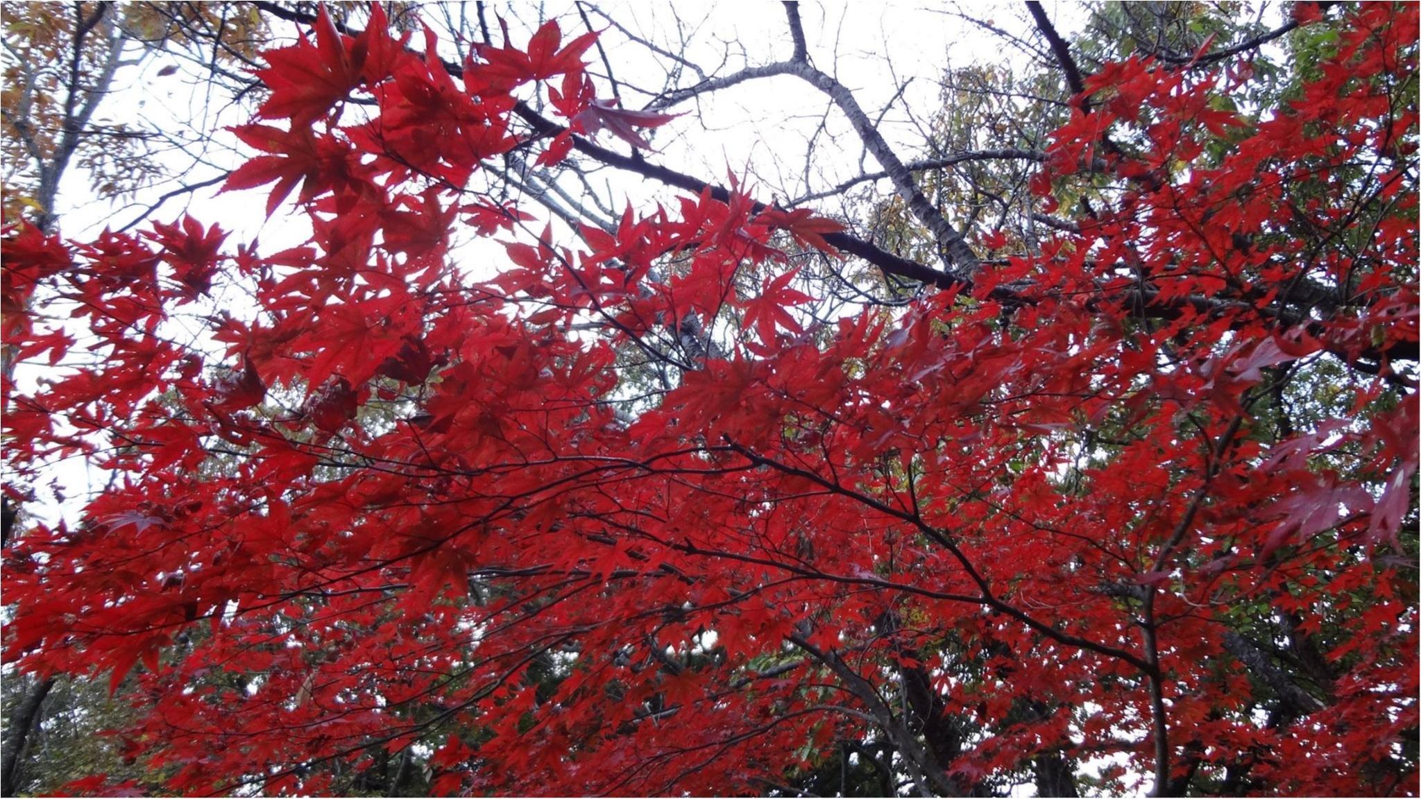 鎌倉にも紅葉の季節がやってきた♡11/20時点で見頃のオススメ紅葉スポットをご紹介✨≪samenyan≫_5