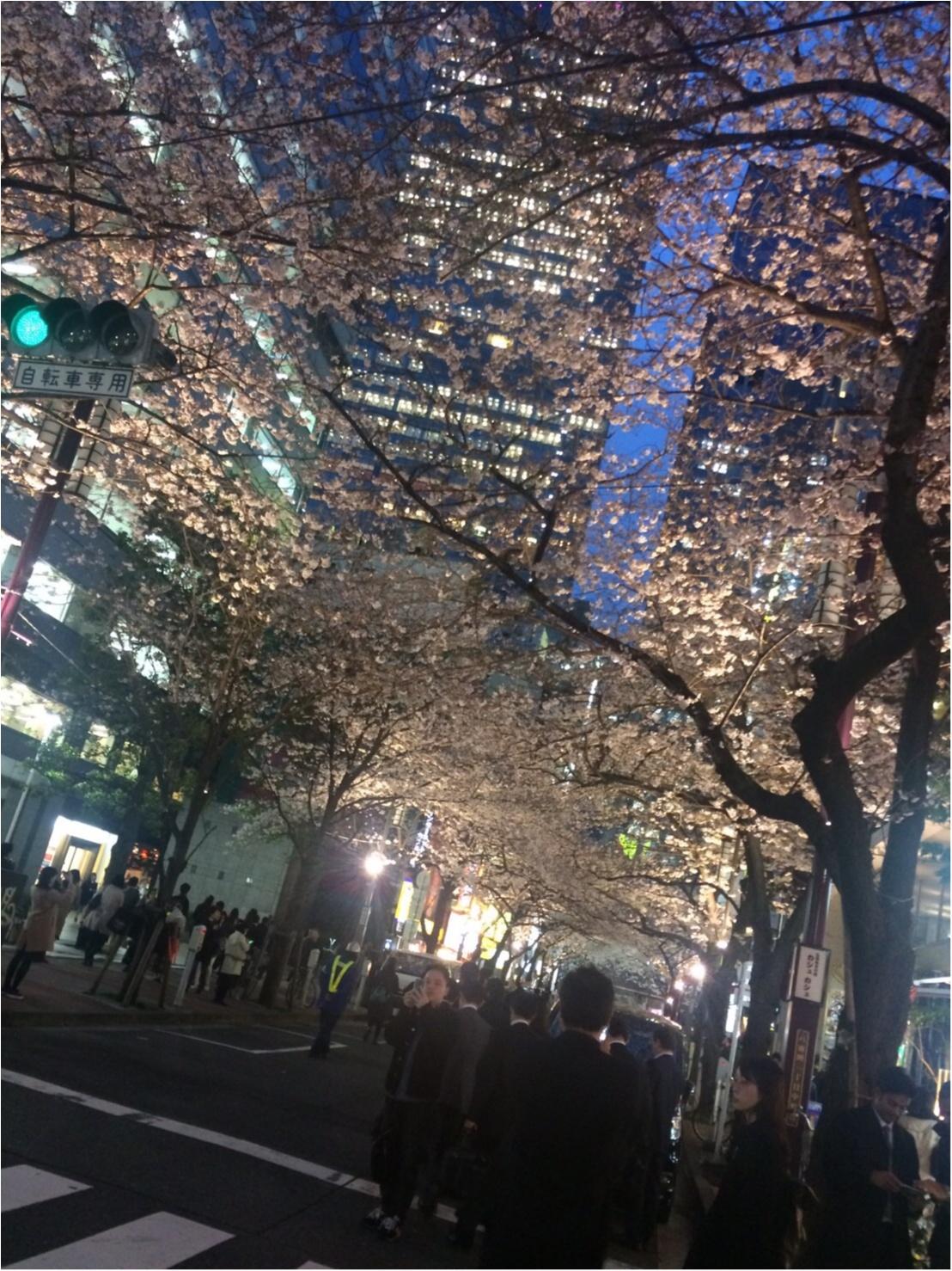 【桜通信】週末で散っちゃう!?最近の桜事情_1