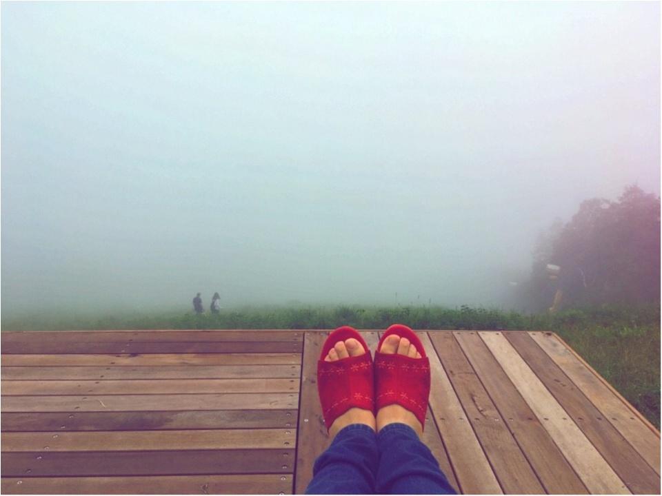 【HISバスツアー】60万本の奇跡!明野ひまわり畑と「清里テラス」&収穫体験ツアー_11