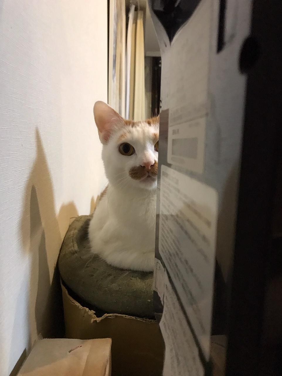 【今日のにゃんこ】熱~い視線で見つめてくるラビくん☆_1