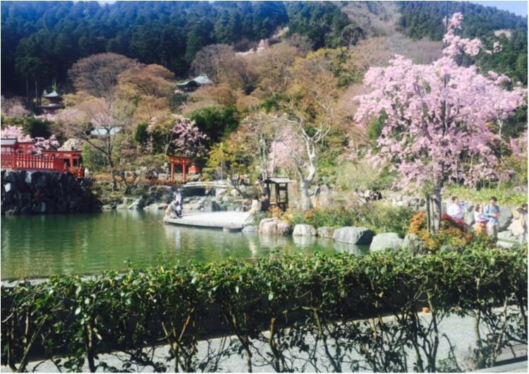 お花見するならピンクをリンク!コーデも桜色にして春を楽しもう♡_3