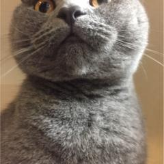 【今日のにゃんこ】もこもこ冬支度♡ レオくんのまんまるフェイス