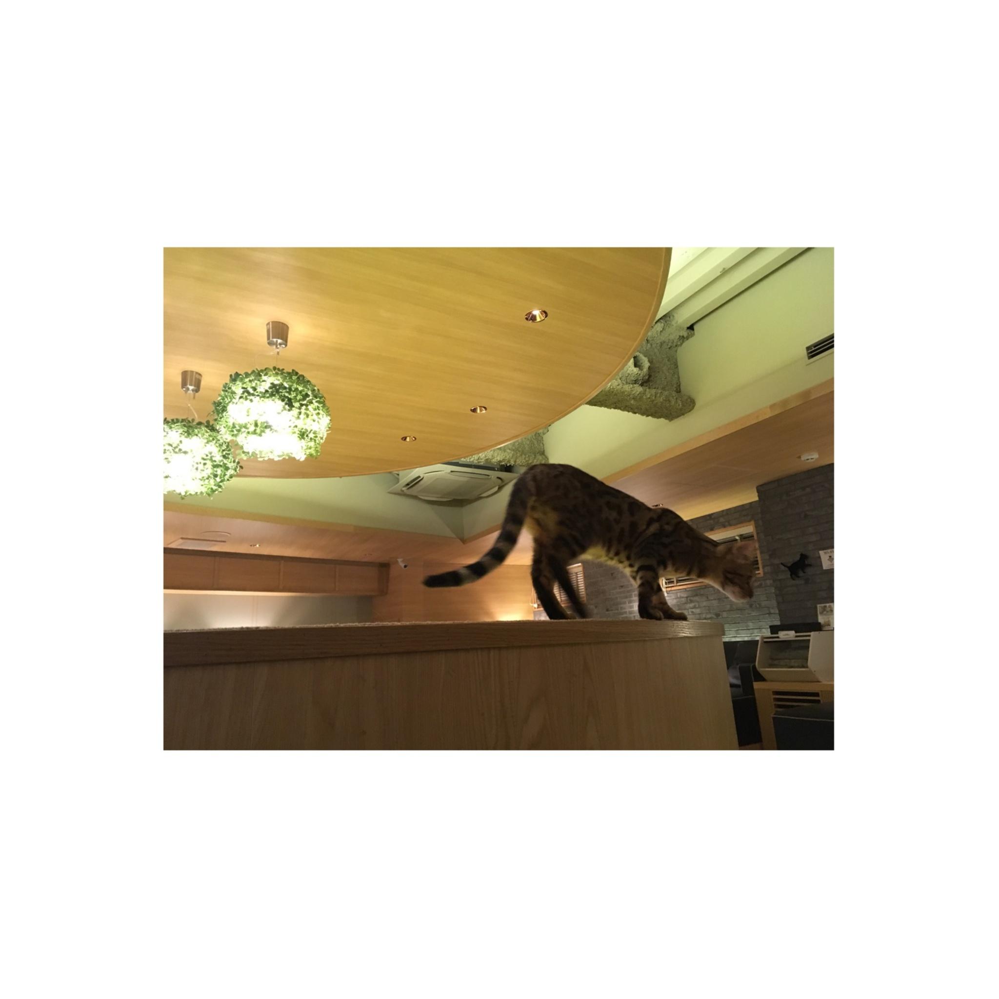 【GWはここで決まり!】日本最大級の猫カフェが新宿に⁈オシャレなラウンジカフェで可愛い猫たちに癒される!_1