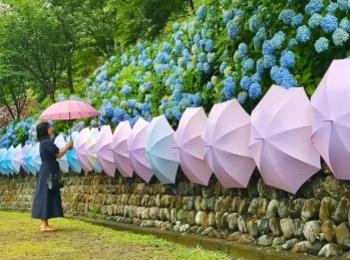 【風鈴×あじさい×傘】 風物詩が詰まったインスタ映えスポット 尊永寺①