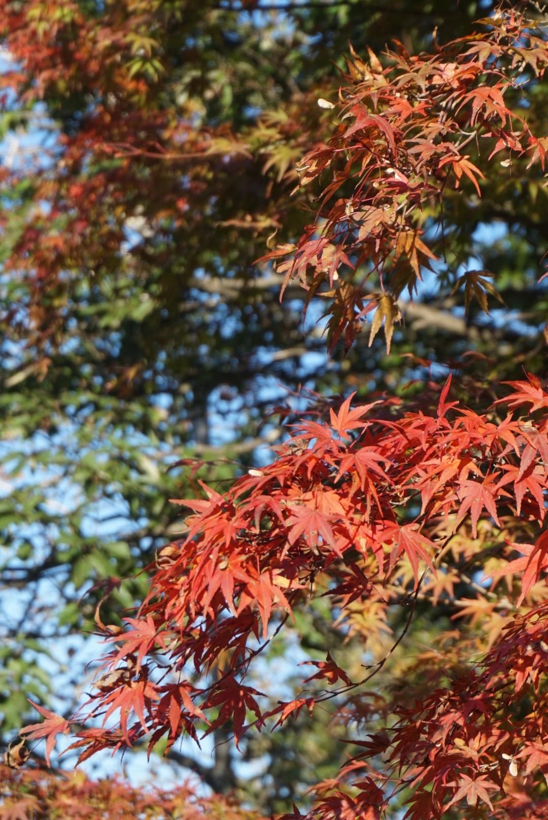 【おでかけ】いよいよ紅葉シーズン♡新宿から1時間以内の紅葉スポットって? _15