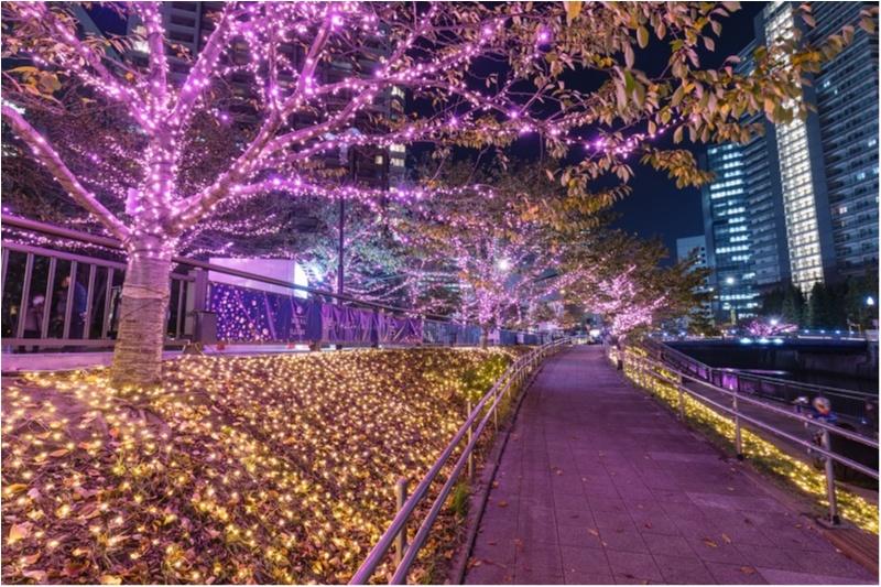 東京都内のおすすめイルミネーション、表参道、恵比寿、お台場etc.11選☆彡_9_1