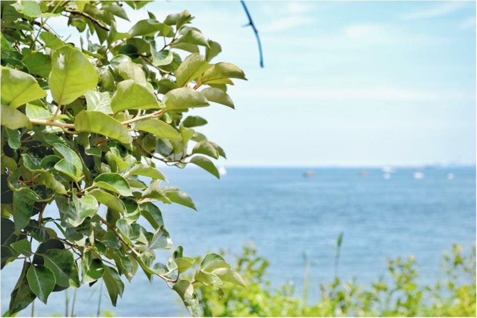 今度のDay Tripはあの無人島に決まり!都内から1時間で行けるラピュタの世界♡_6