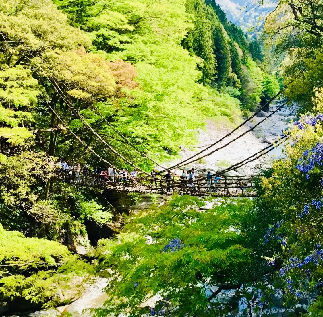 徳島県・三好の絶景スポット「祖谷のかずら橋」