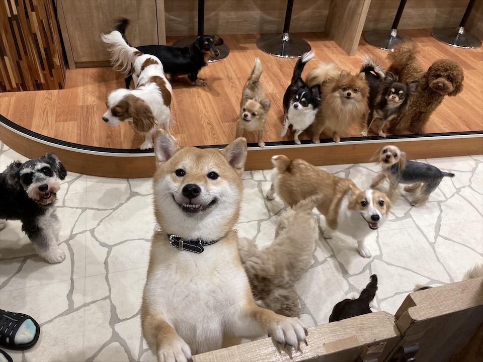 【わんこ好きさん必見!】puppy cafe RIO行ってきました♡癒されまくりスポット!_1