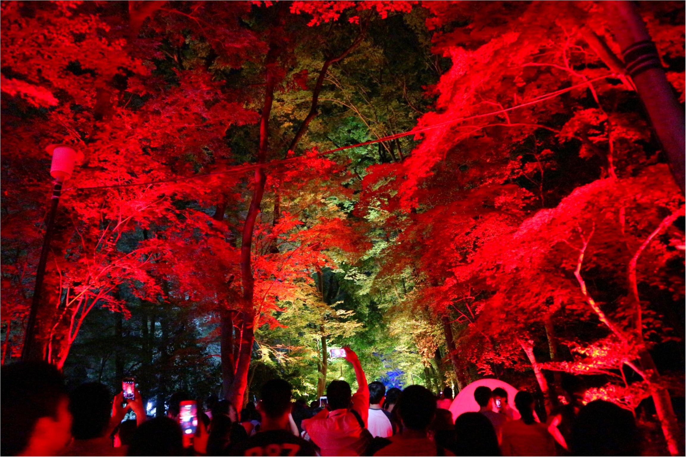 【京都】下鴨神社のライトアップで幻想的な夜を♡_3