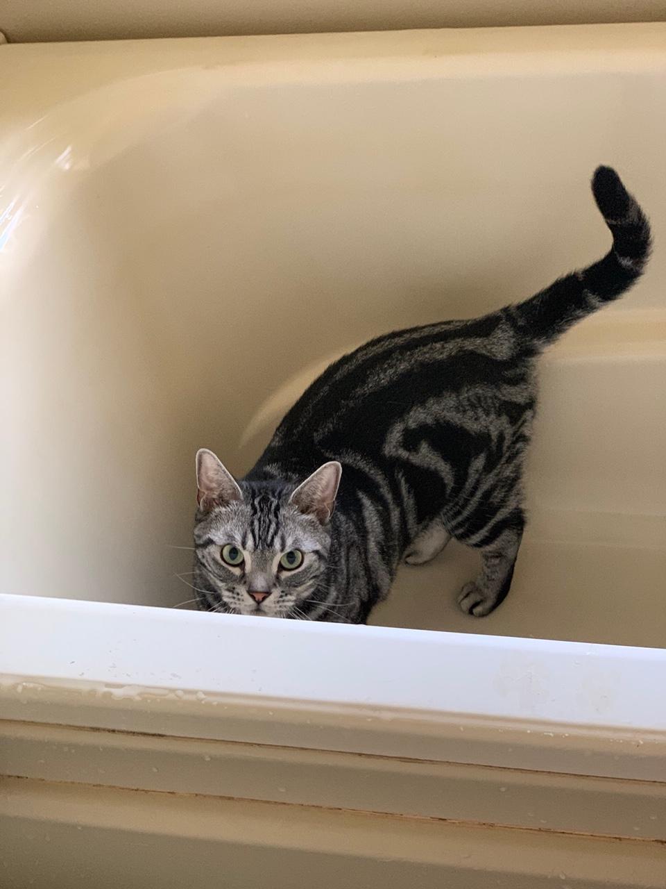 お風呂の浴槽に入るソラくん