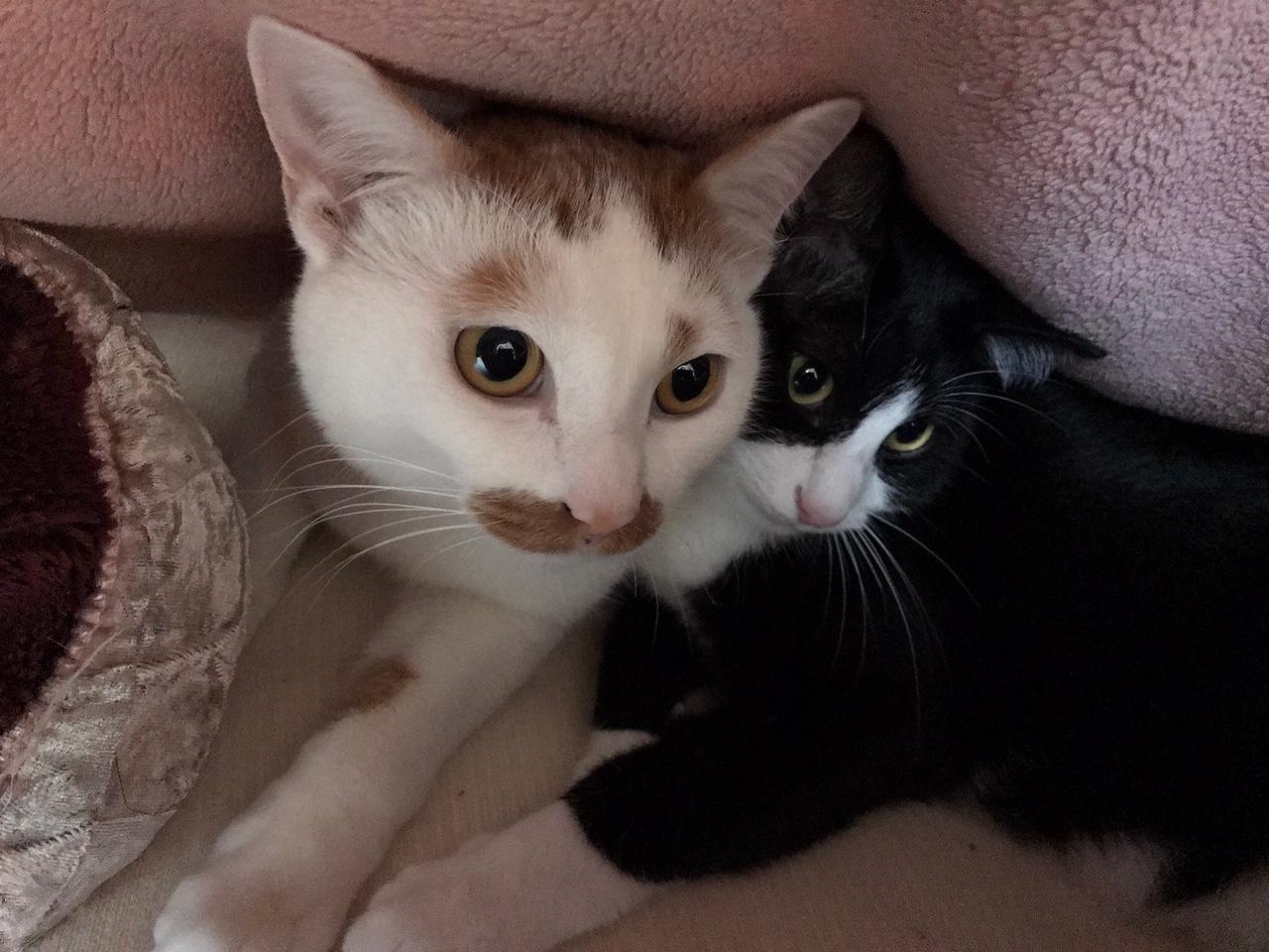 【今日のにゃんこ】毛布の中で仲良く温まる、ルウくんとラビくん_1