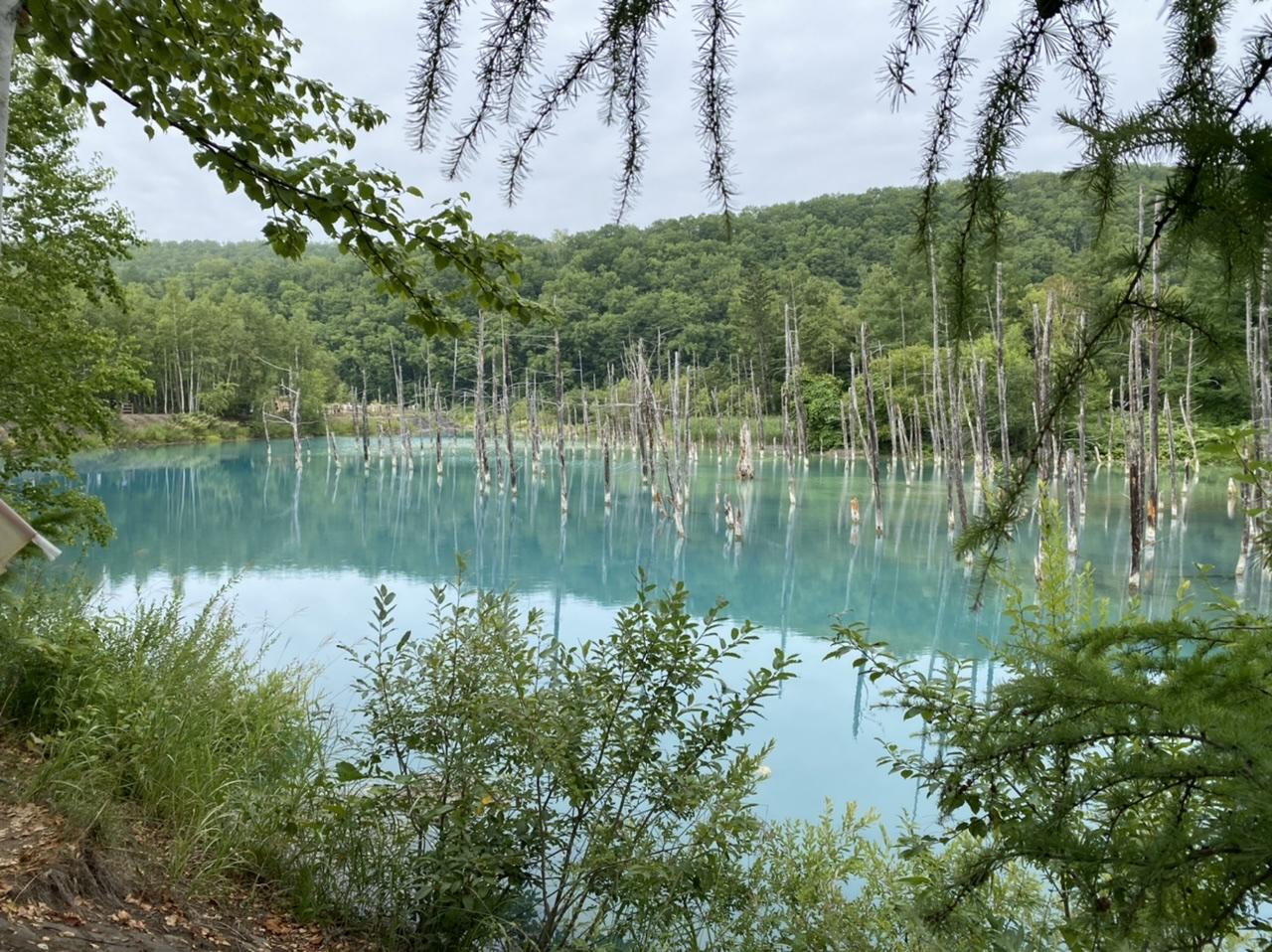 【北海道観光】美瑛町の青い池に行って来ました♪_1