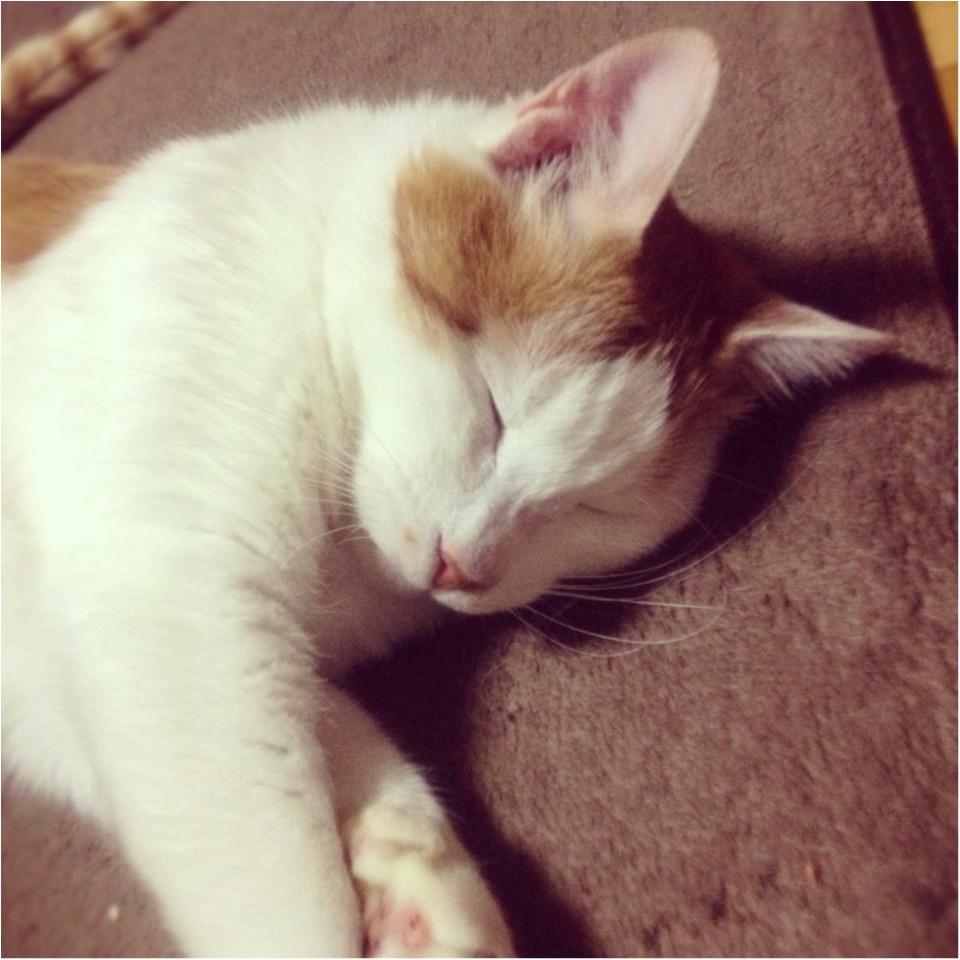 《おしゃれな人はみんな注目している♡》今年持つべきものは猫のモチーフ♡_6