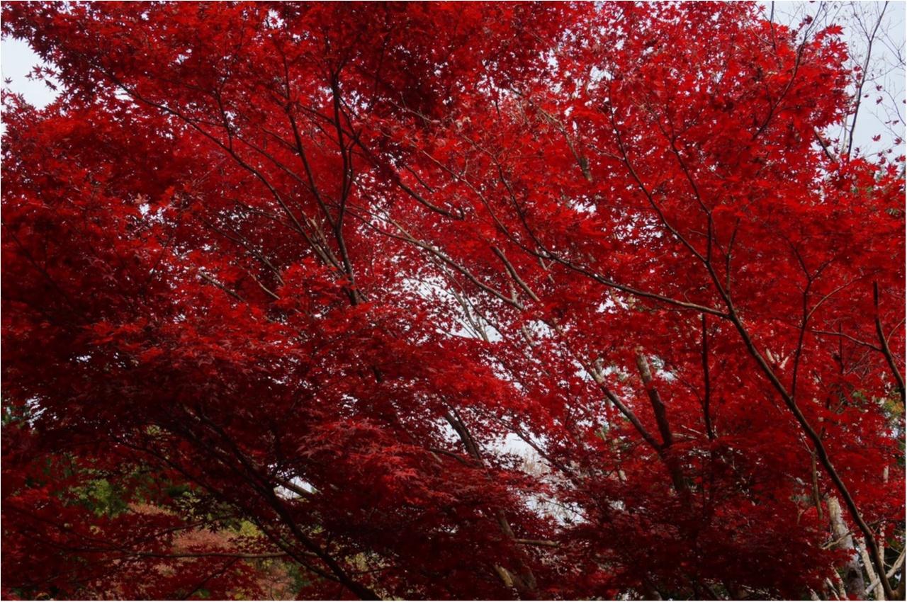 【関西おでかけ】のんびり散策できるオススメ紅葉スポット_3