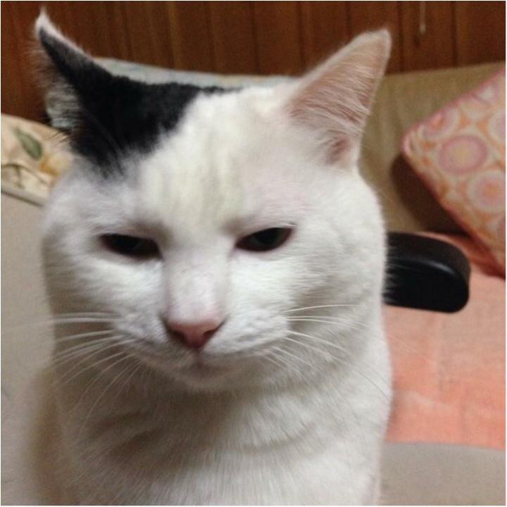 猫好き集まれっ♡ 今日のにゃんこ✳︎モアハピver♡_9