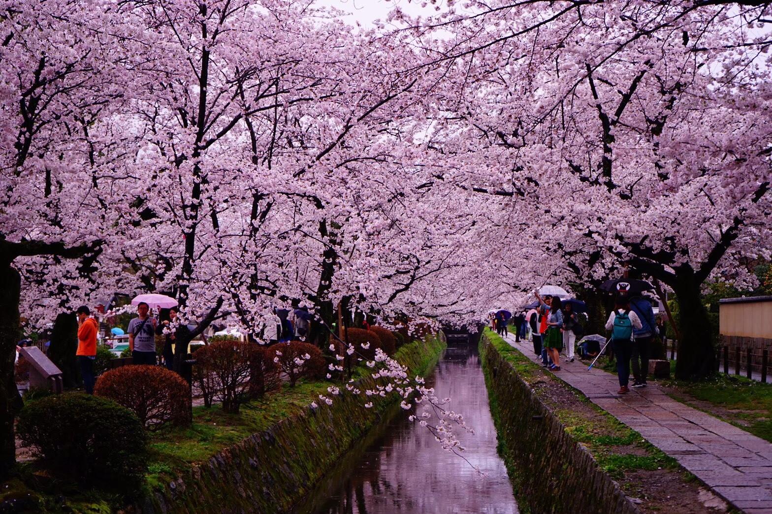 【女子旅におすすめ】京都で体験して最高だったベストメモリーまとめ♡_19