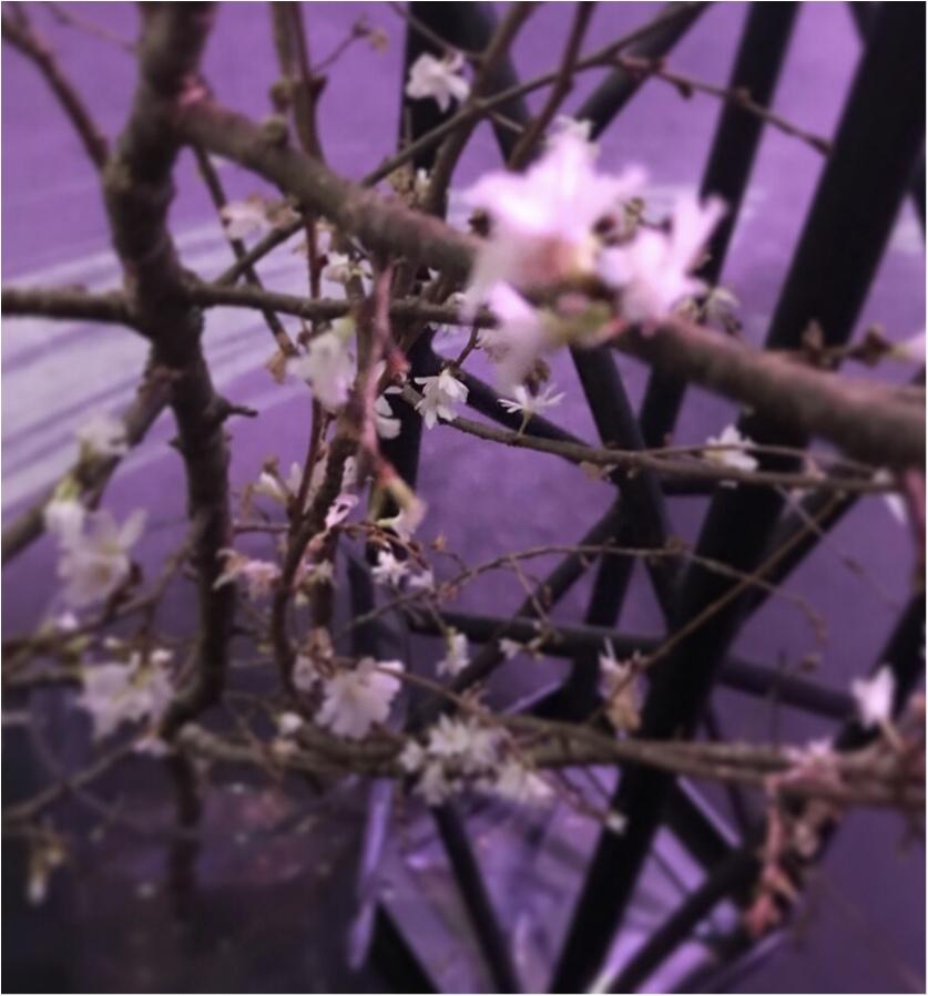 【Flower by NAKED】生花と映像のコラボ♡ フォトジェニックな秋に咲く桜を見てきました♡_3