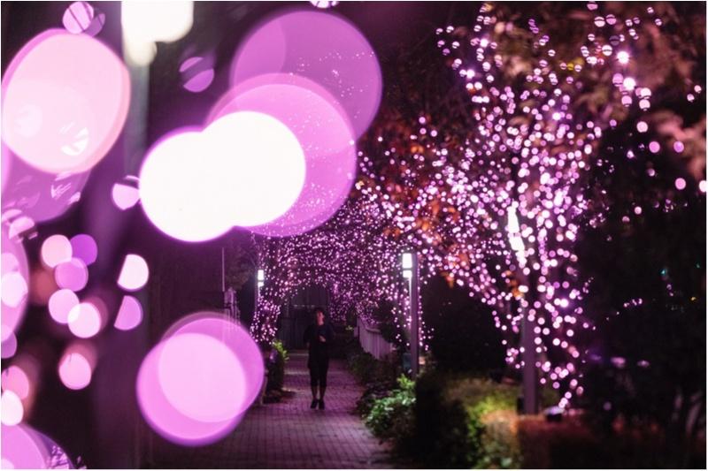 東京都内のおすすめイルミネーション、表参道、恵比寿、お台場etc.11選☆彡_9_2
