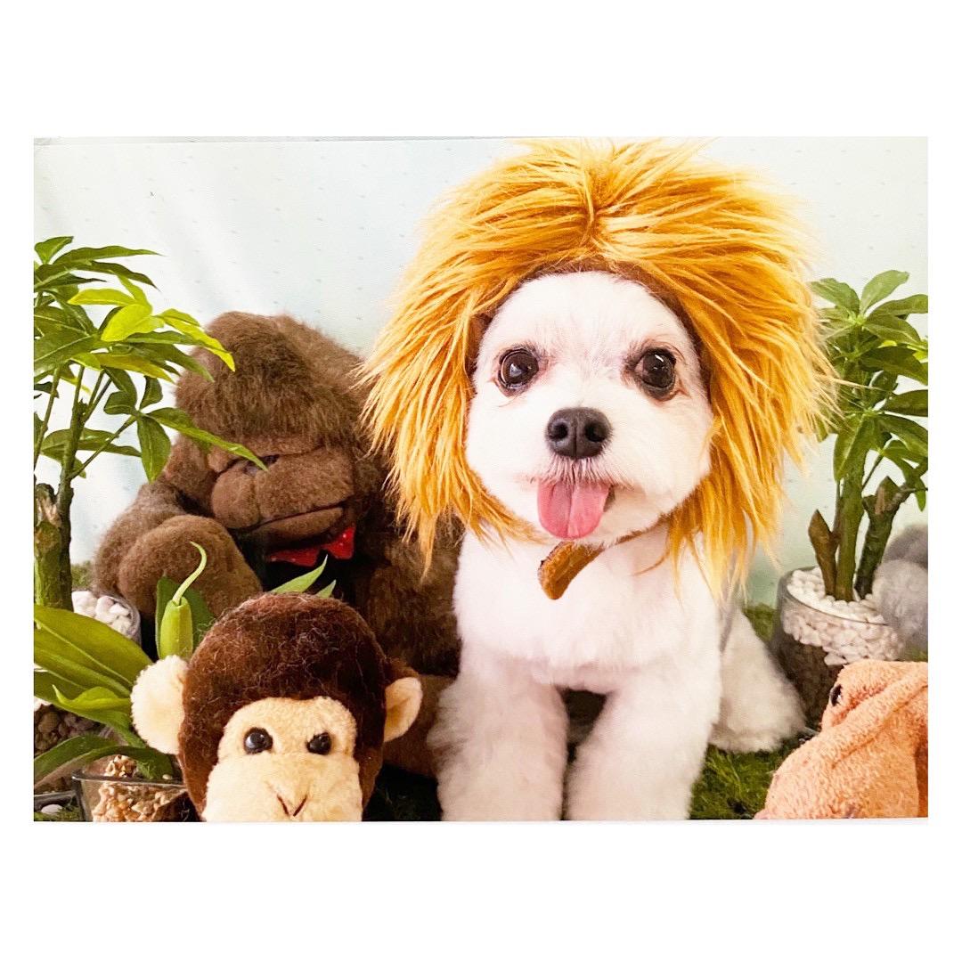 家でライオンキングごっこを楽しむ太郎くん