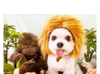 【今日のわんこ】ライオン(?)になりきる太郎くん☆