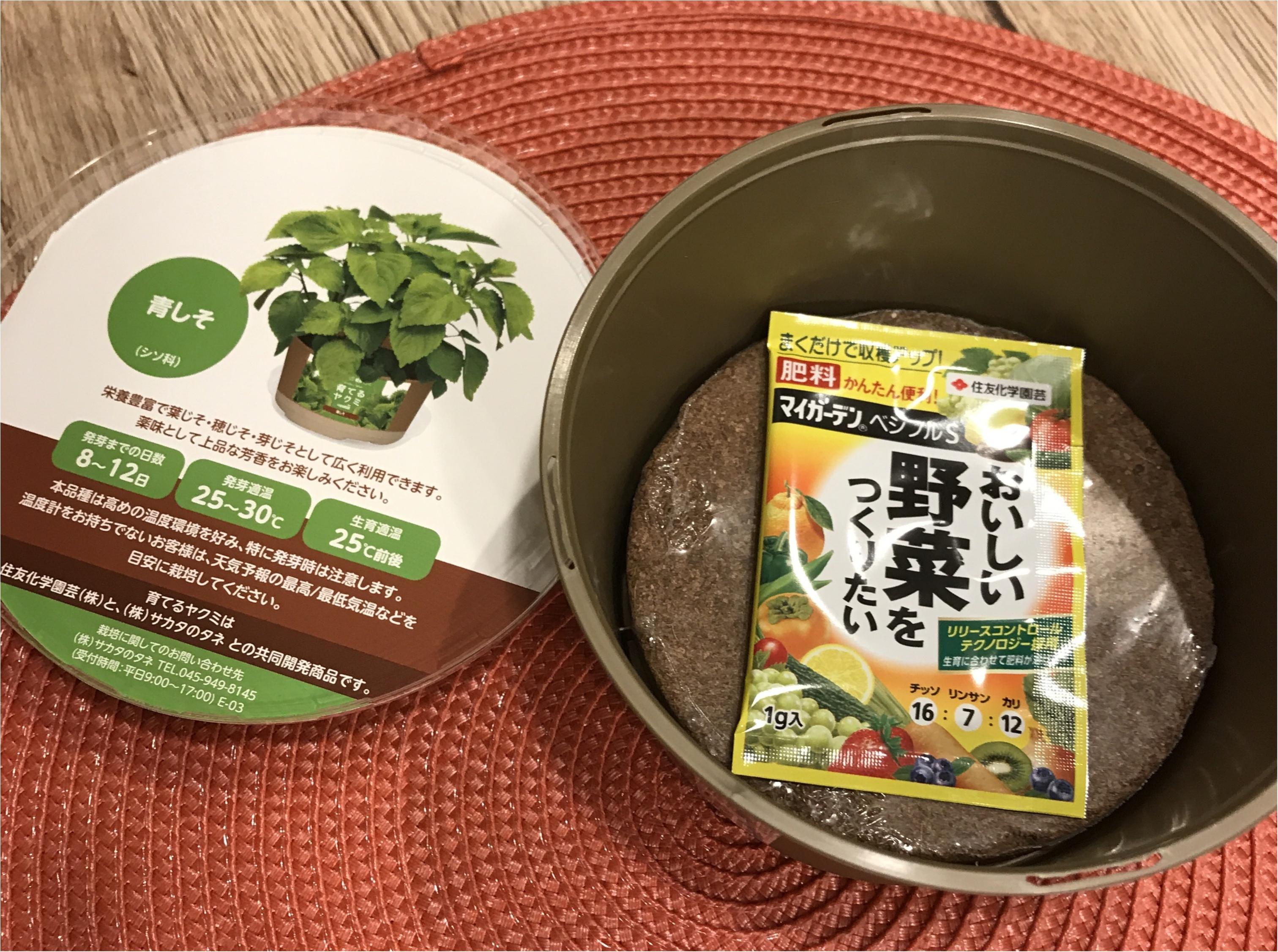 【life】コンビニで売っていた〇〇を試してみます!プチ家庭菜園デビュー!!_2