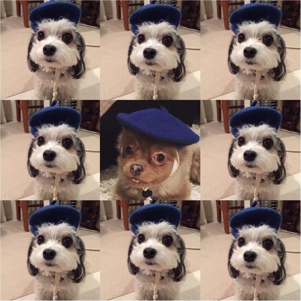 【今日のわんこ】芸術家気分♪ ベレー帽をかぶった太郎くん&お友達_1