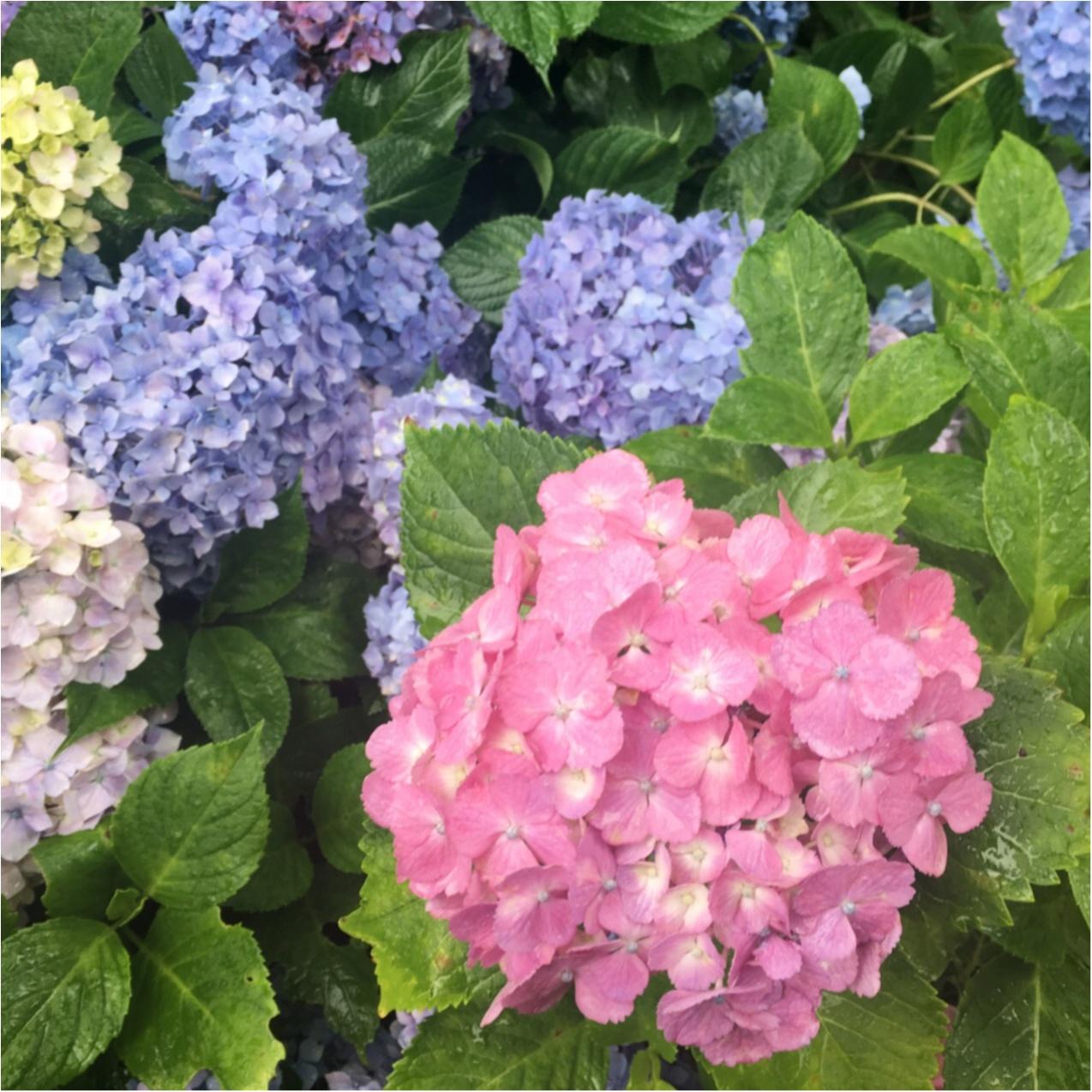 梅雨の時期に見たい♪紫陽花の名所へおでかけ…*見つけたハートの紫陽花♡_4