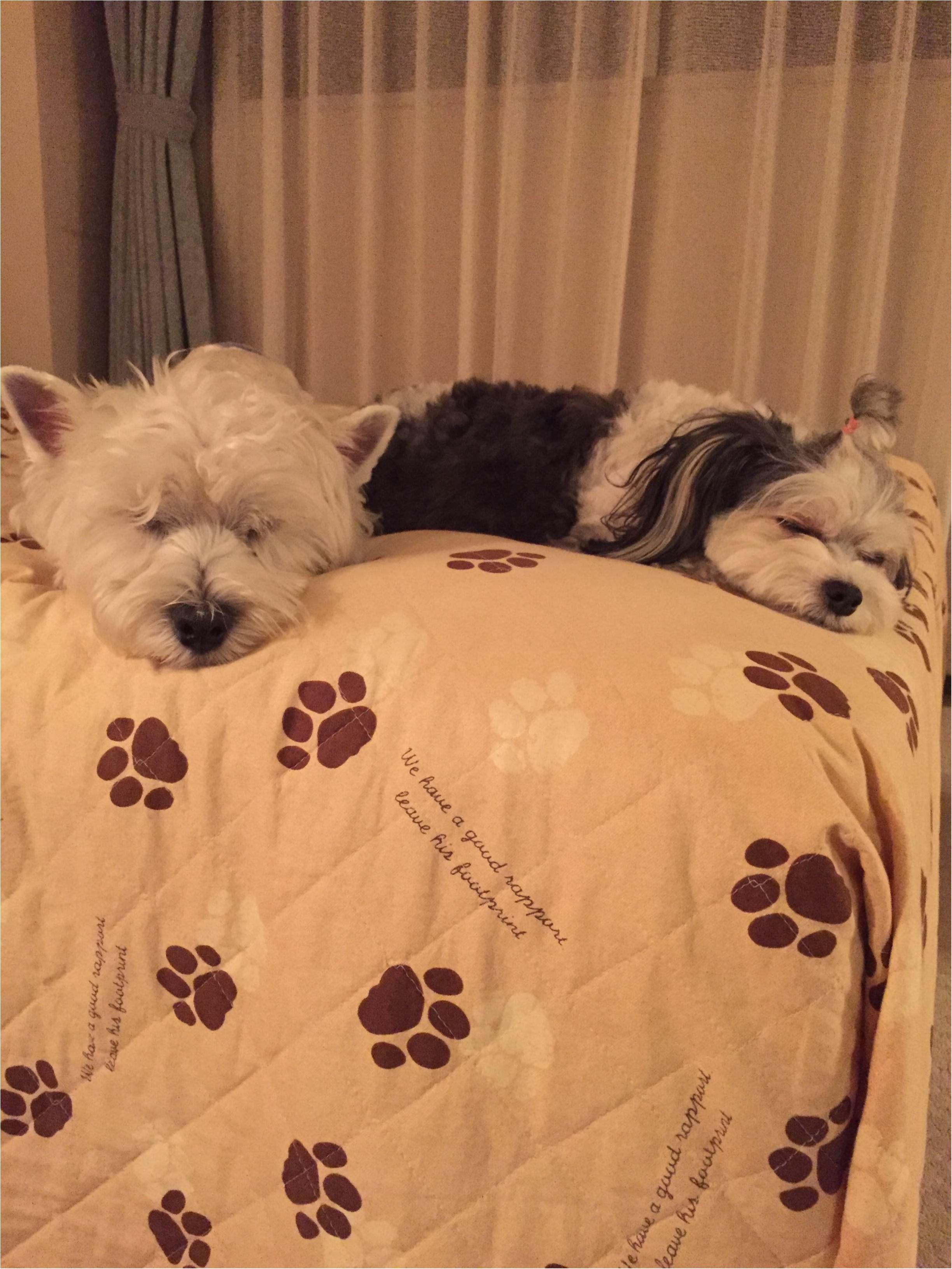 【今日のわんこ】遊び疲れて寝る太郎くんと、新しいお友達♪_1