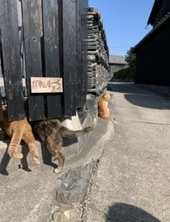 【愛知県の離島:佐久島】アートの島!フォトジェニック旅!_8