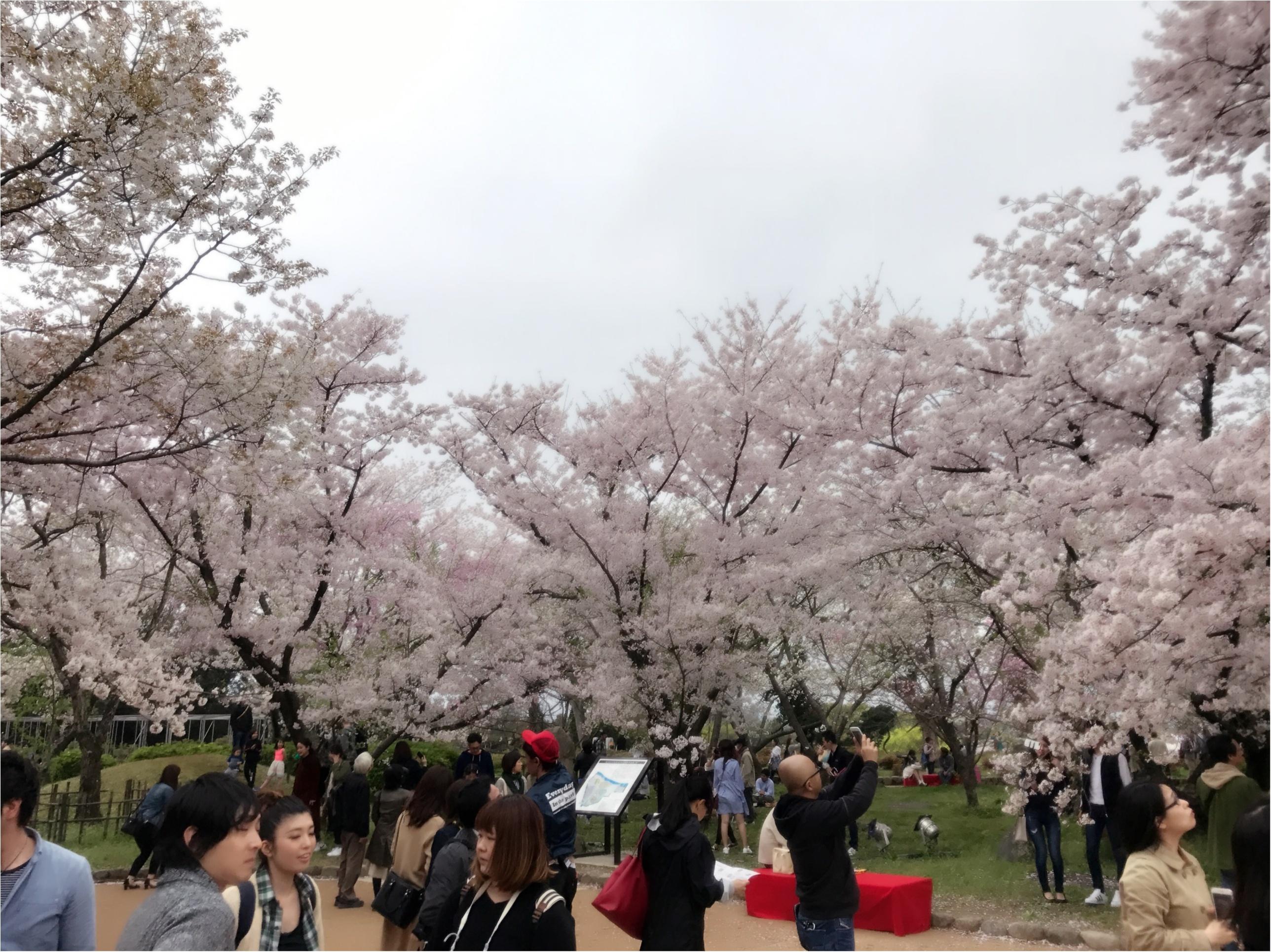 《公園はしご旅》in 福岡 今が見頃!とっておきの桜スポットをご紹介!!_9