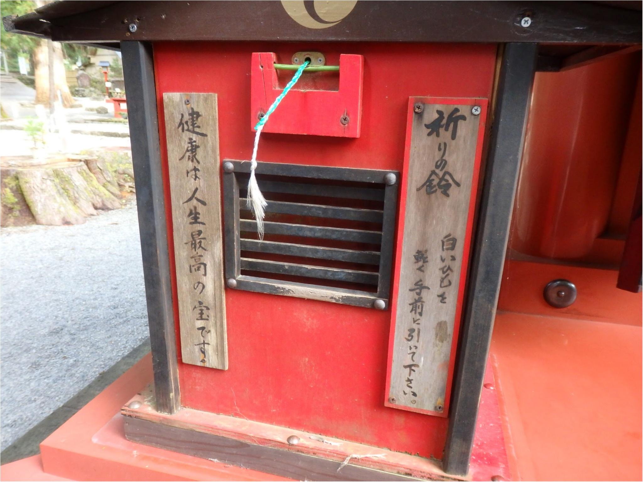【知らなかった!】日本一楽しめる神社へ潜入してみた_30