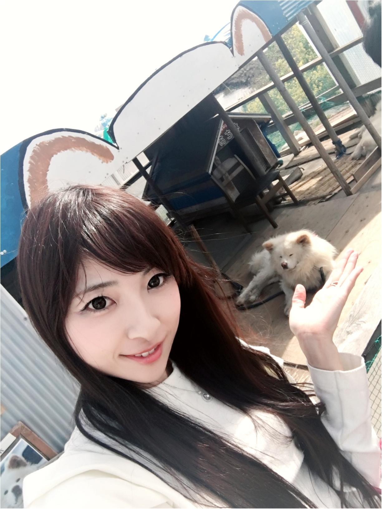 【ブサカワ犬わさお】に会える方法♡モアハピ◡̈のぞみ♡_2