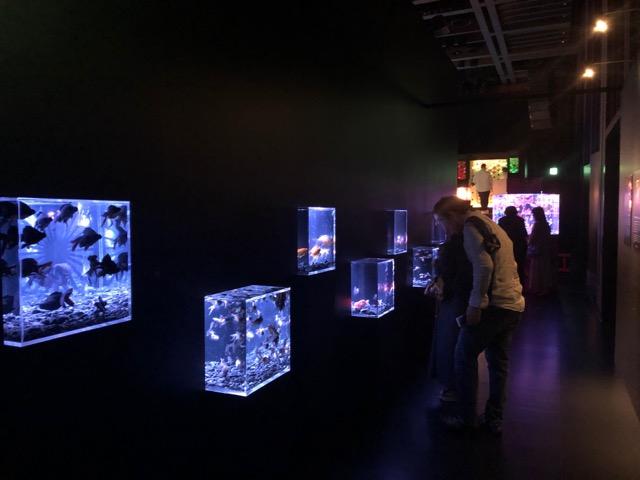 【日本橋】アートアクアリウム2019に行ってきました♡【ファンタジーの世界】_5