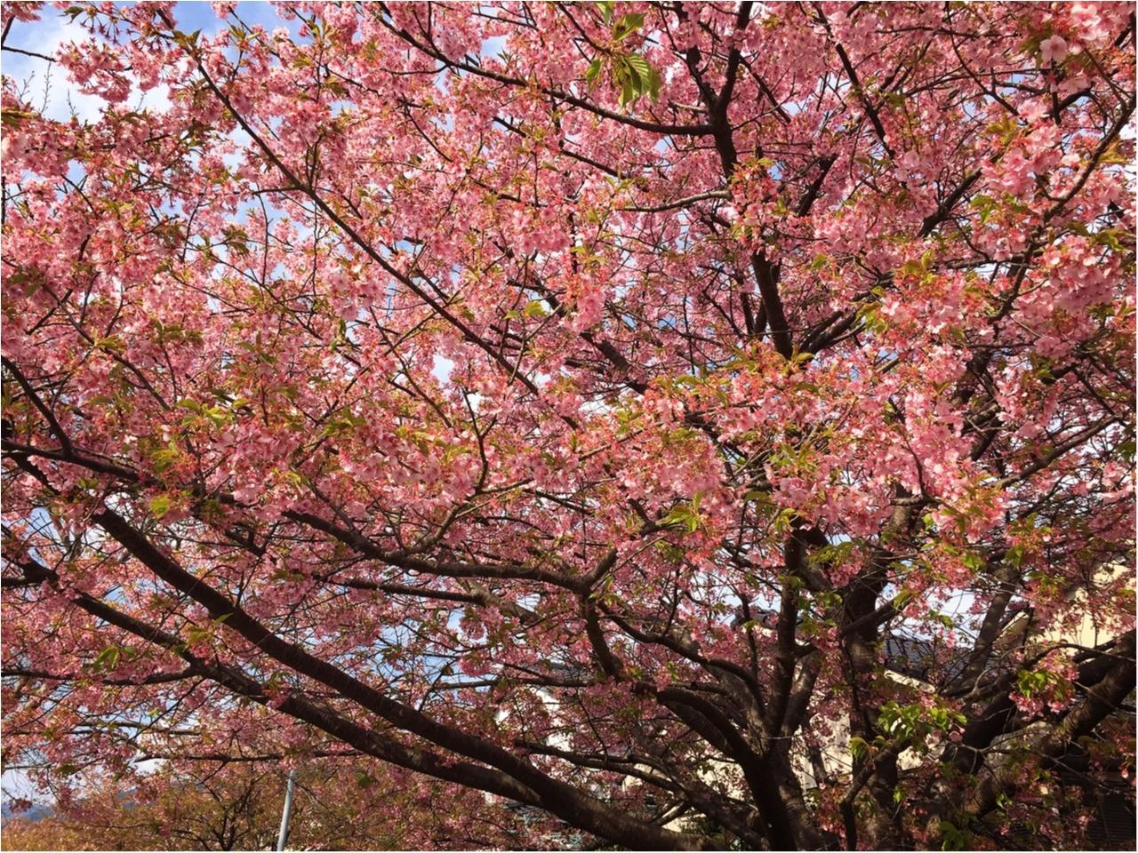 春の訪れを感じに…『河津桜まつり』へ行ってきました♡*_7