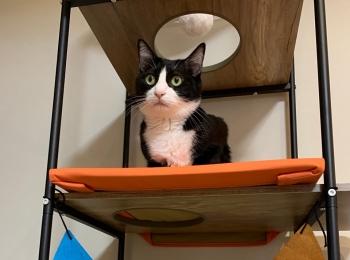 【今日のにゃんこ】ルウくんがキャットタワーの上段をGET!