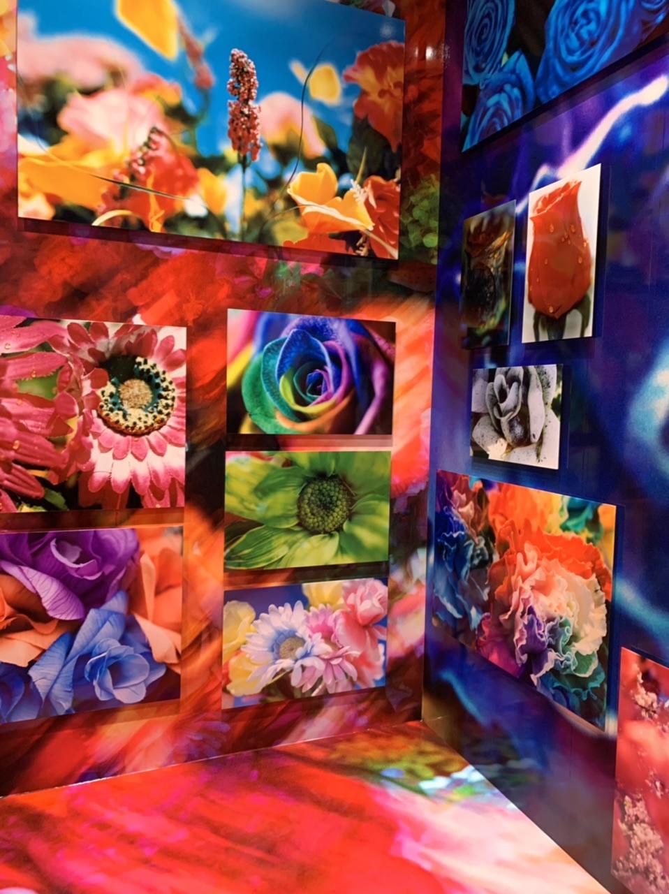 11/14(日)まで!上野の森美術館で開催中の蜷川実花展に行ってきました!_5