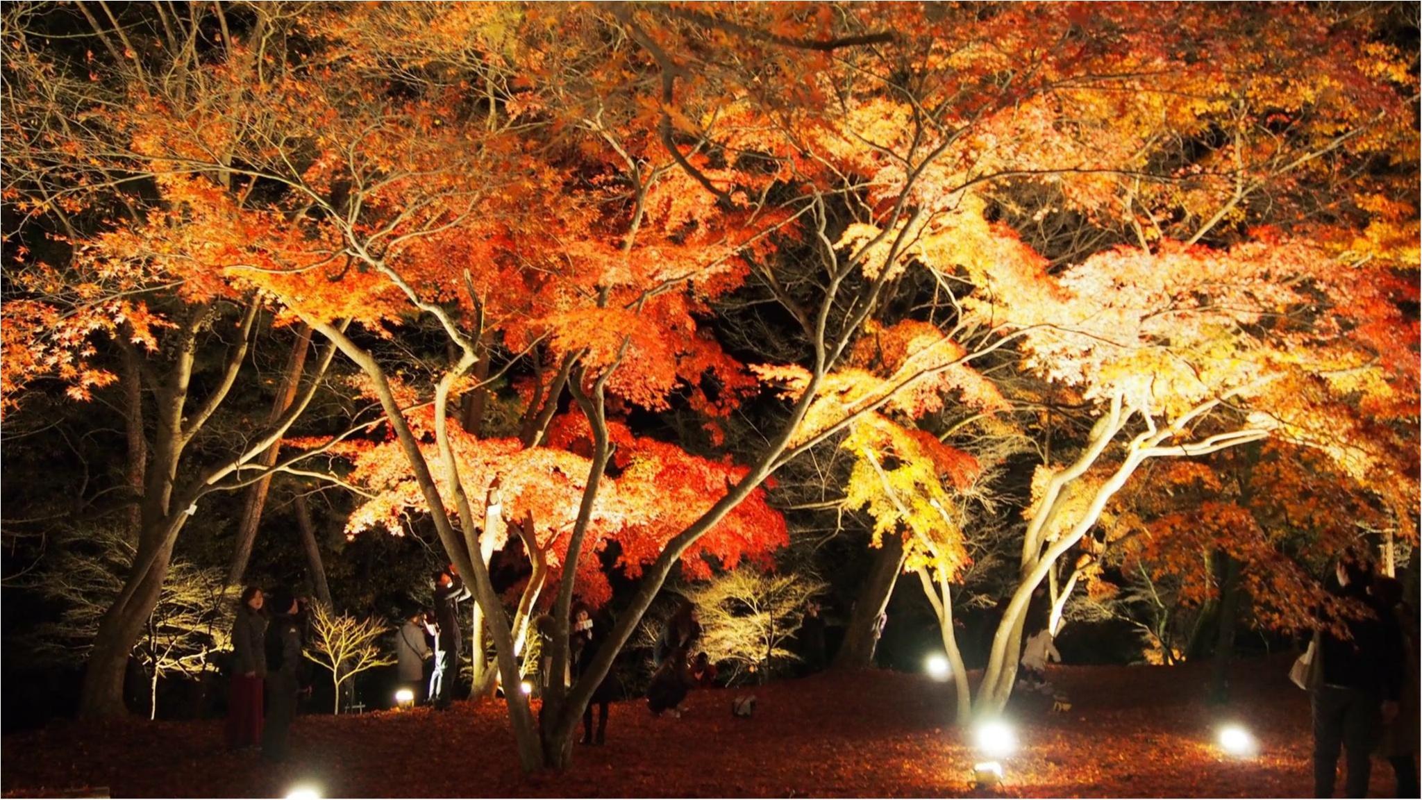 紅葉を満喫♩都心から二時間のとっておきの癒しスポット・秩父長瀞へ!_10