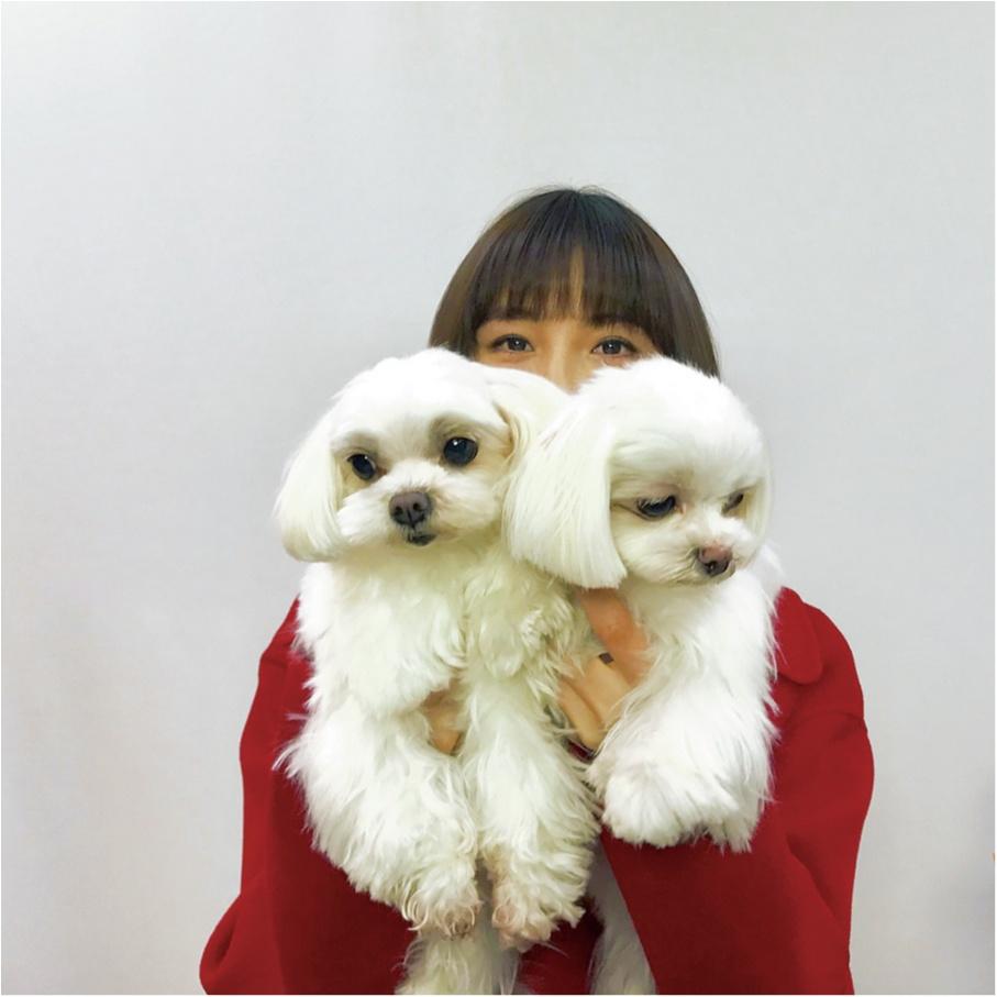 【お疲れの時のリフレッシュ方法は?】篠田麻里子ちゃんは、愛犬たちと遊ぶこと!_1