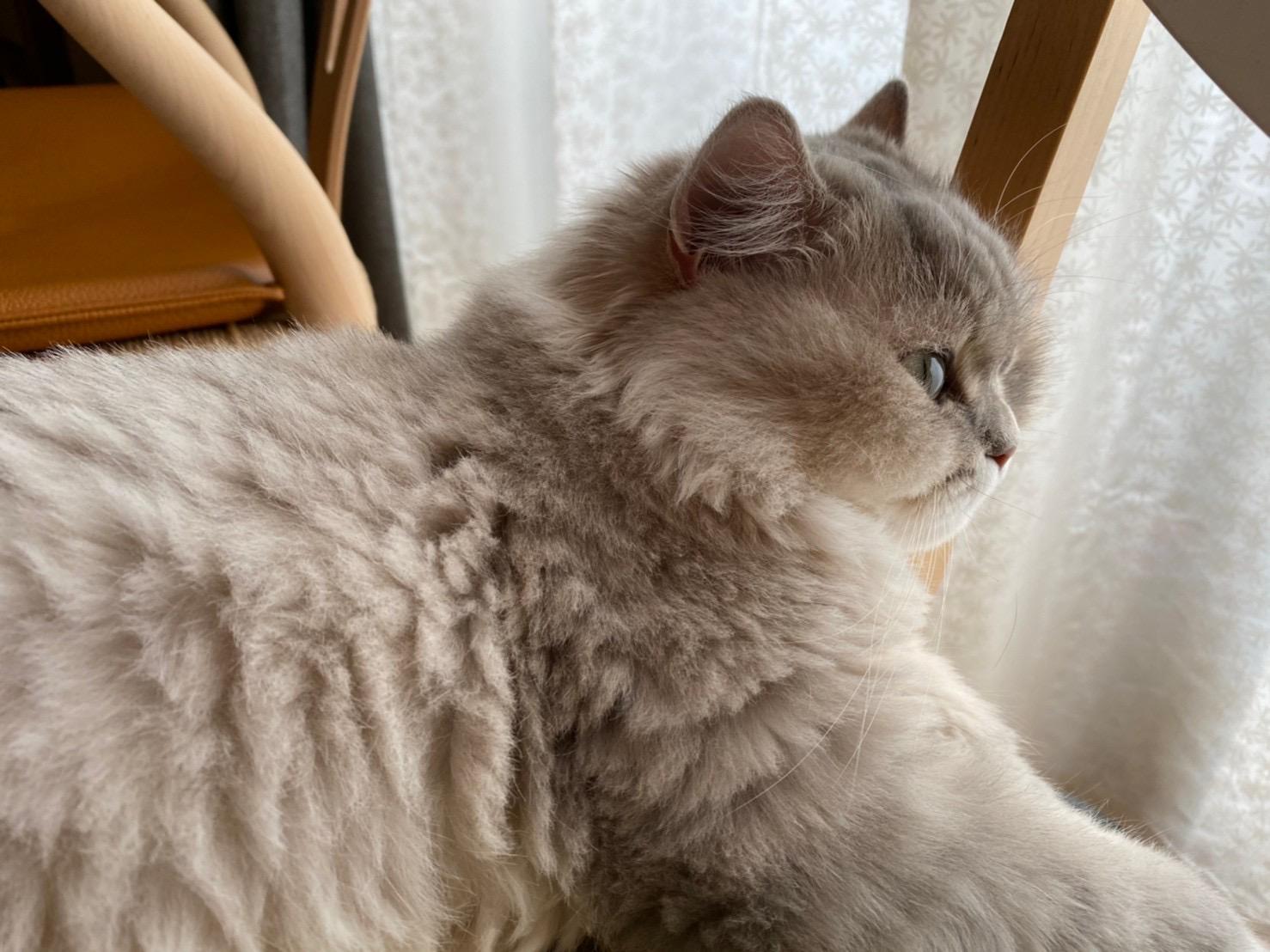 家の中から外を眺めるココンちゃん