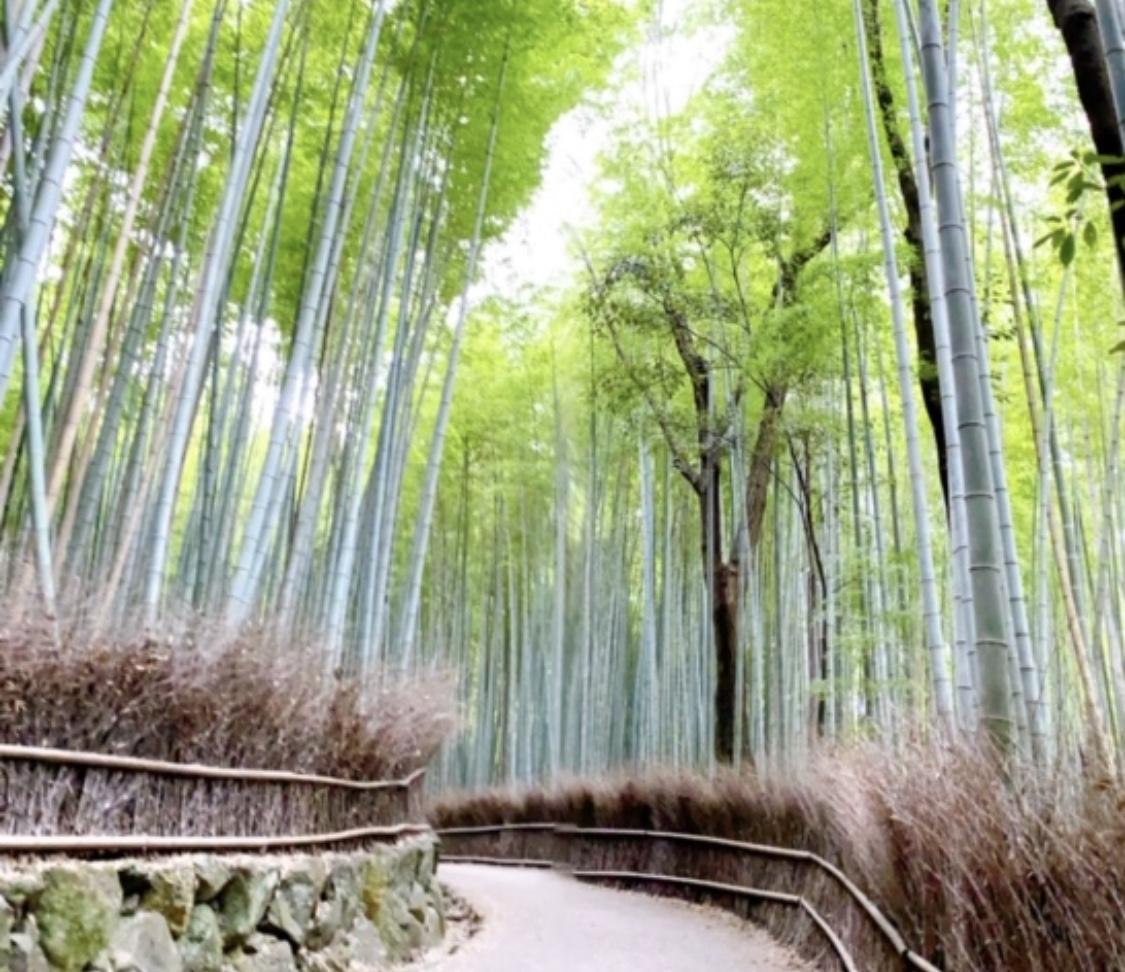 【女子旅におすすめ】京都で憧れの町家一棟貸し!_21