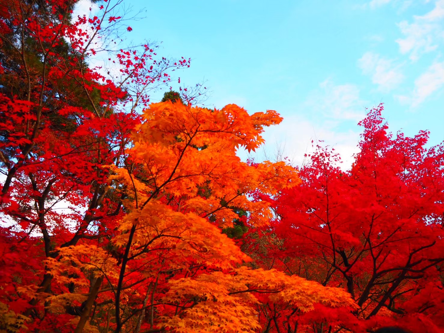 【女子旅におすすめ】京都で体験して最高だったベストメモリーまとめ♡_13
