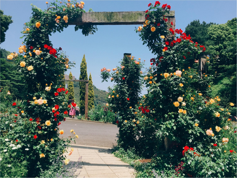 【お出掛けスポットin熱海】今が見頃のローズガーデン!薔薇のトンネルにうっとり…♡_6