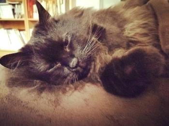 【今日のにゃんこ】お気に入りの場所で眠る、ゆらちゃん