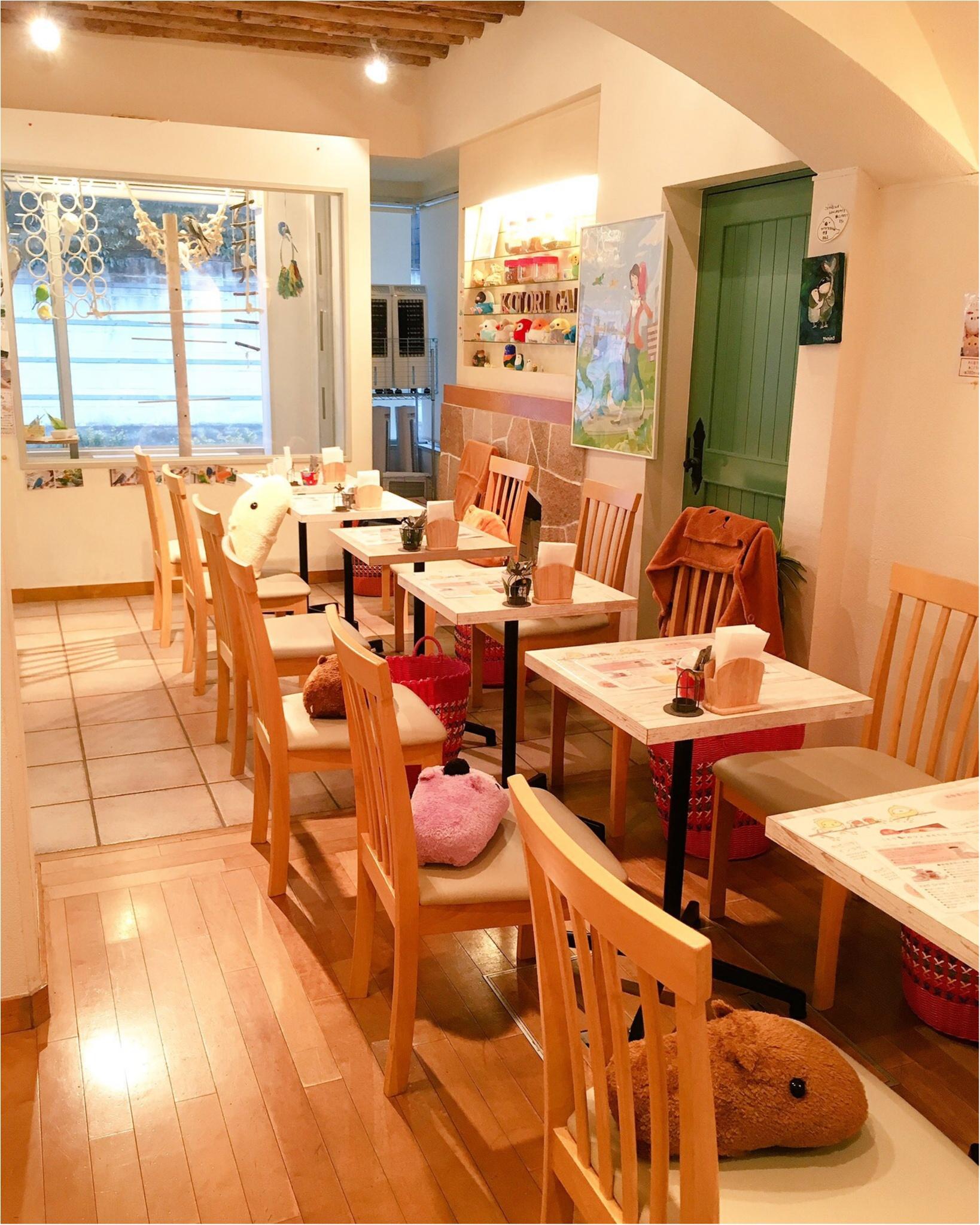 『カピバラさん×ことりカフェ』コラボ♡ことりカフェ表参道店でカピバラさんケーキを食べてきました(﹡´◡`﹡ )_2